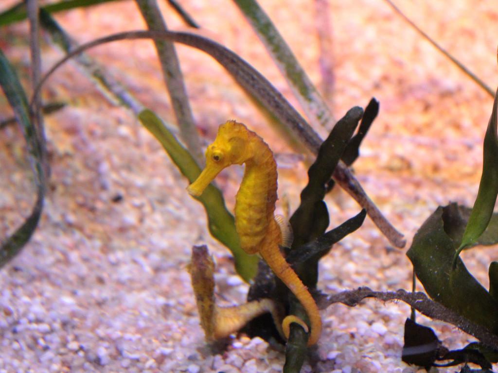 Wizyta w Palma Aquarium