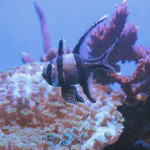 Majorka, Palma Aquarium