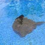 Majorka, Palma Aquarium - zbiornik z płaszczkami