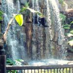 Majorka, Palma Aquarium - dżungla