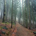 Szklarska Poręba: zamglone lasy