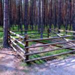 Bory Tucholskie: mrówkowe podwórko