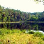 Bory Tucholskie: jezioro dystroficzne, Kacze Oko
