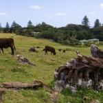 Lord Howe Island; autor zdjęcia: Fanny Schertzer