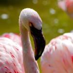 Niemcy, Berlin Zoo; autor zdjęcia: http://www.flickr.com/photos/drgaz/2501745111/