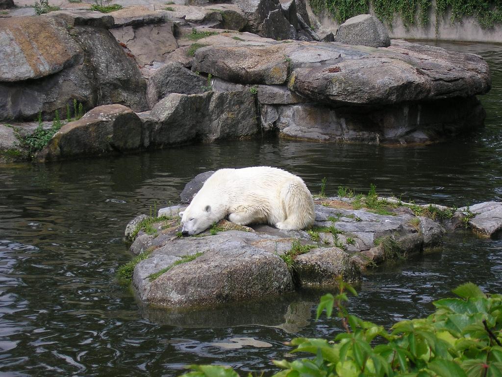 Niemcy, Berlin Zoo; autor zdjęcia: http://www.flickr.com/photos/zooeurope/2727830734/