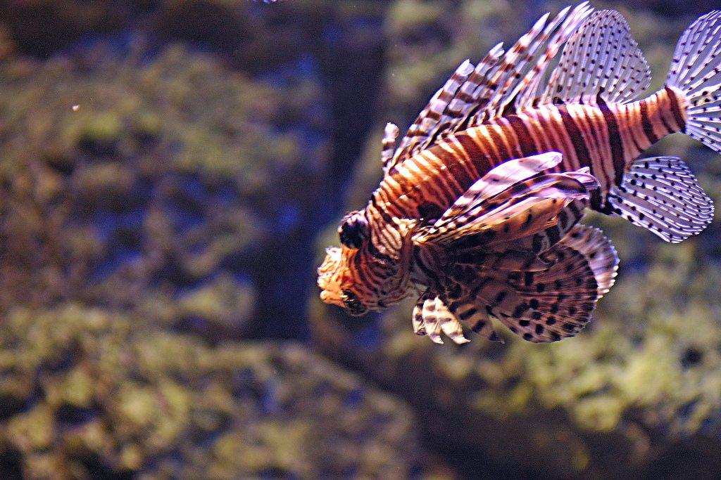 Aquarium Berlin – fotorelacja