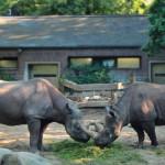 Niemcy, Berlin Zoo