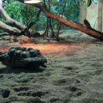 Berlin: Hauptstadt Zoo - Aquarium