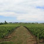 Autostrada Panamerykańska: winnice w Molinie, Chile; źródło zdjęcia: http://www.flickr.com/photos/ponyboy101/4203481950/