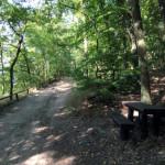 Wielkopolski Park Narodowy - ścieżka rowerowa przy jeziorze Góreckim
