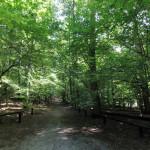 Wielkopolski Park Narodowy - ścieżka rowerowa do jeziora Kociołek