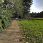 Arboretum w Kórniku, droga do pneumatoforów