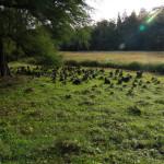 Arboretum w Kórniku, pneumatofory
