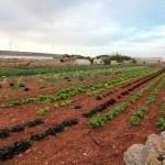 Malta: okolice Popeye Village