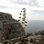 Malta: w drodze do Blue Grotto