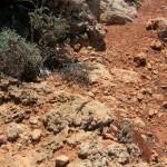 Malta: pustynne Comino i jaszczurki na każdym kroku