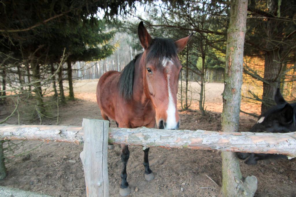Puszcza Zielonka, stadnina koni