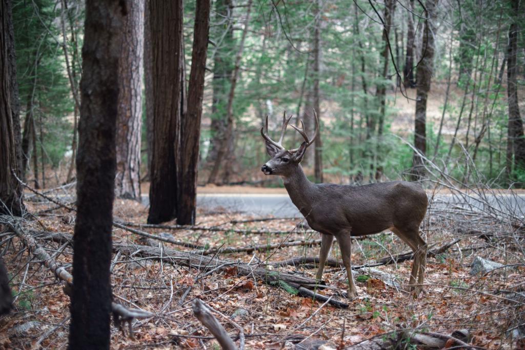 Park Narodowy Yosemite, dzika natura ma się tutaj dobrze. Autor zdjęcia: Stanislav Sedov