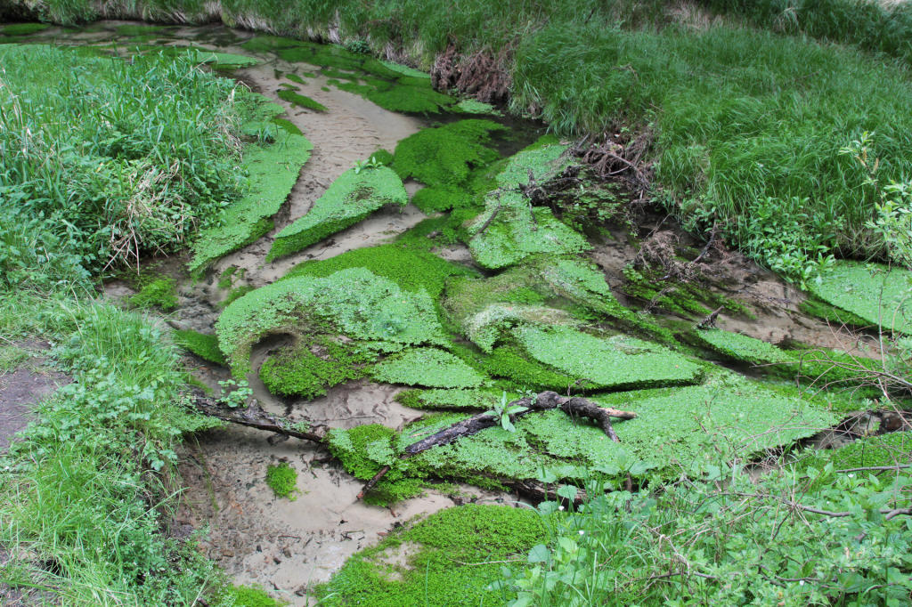 Czeska Szwajcaria: czyste wody Kamienicy