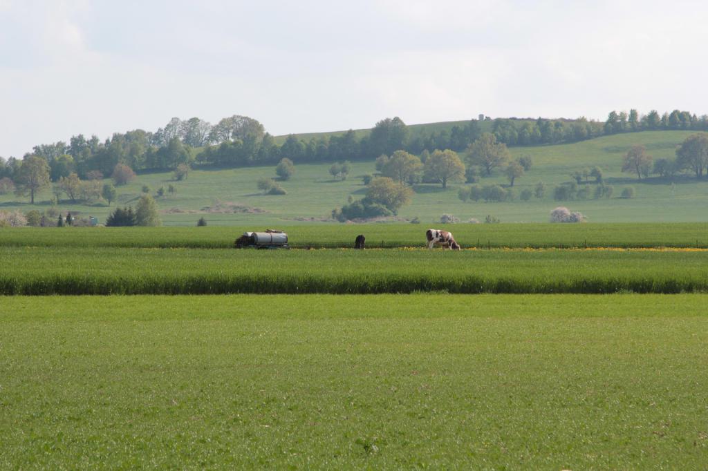 Saska Szwajcaria: polany, łąki