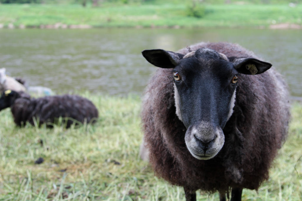 Saska Szwajcaria: doga do Rathen wzdłuż Łaby