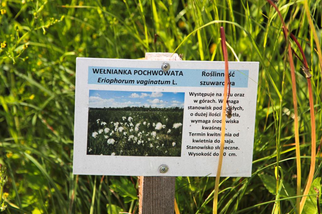 Flora przy jeziorze Swarzędzkim