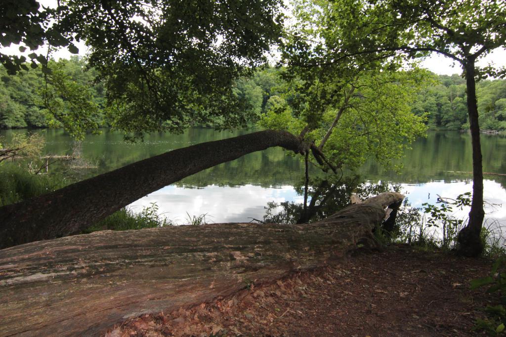 Wielkopolski Park Narodowy, jezioro Kociołek