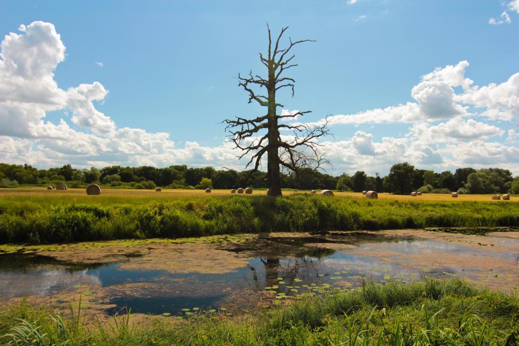 Rogaliński Park Krajobrazowy, Dęby Rogalińskie