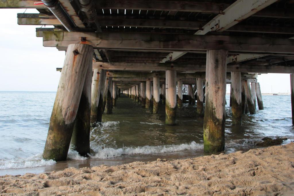 Sopot: molo widziane z perspektywy żółwi morskich