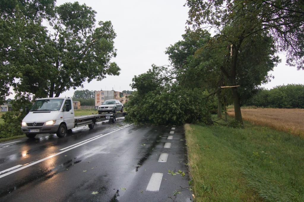 Połamane drzewa na drodze nr 24