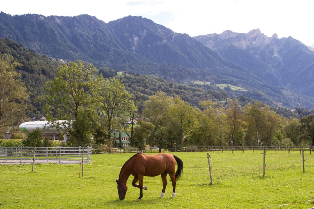 Liechtenstein: wybieg dla koni