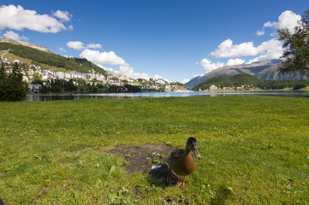 Szwajcaria: jezioro Sankt Moritz