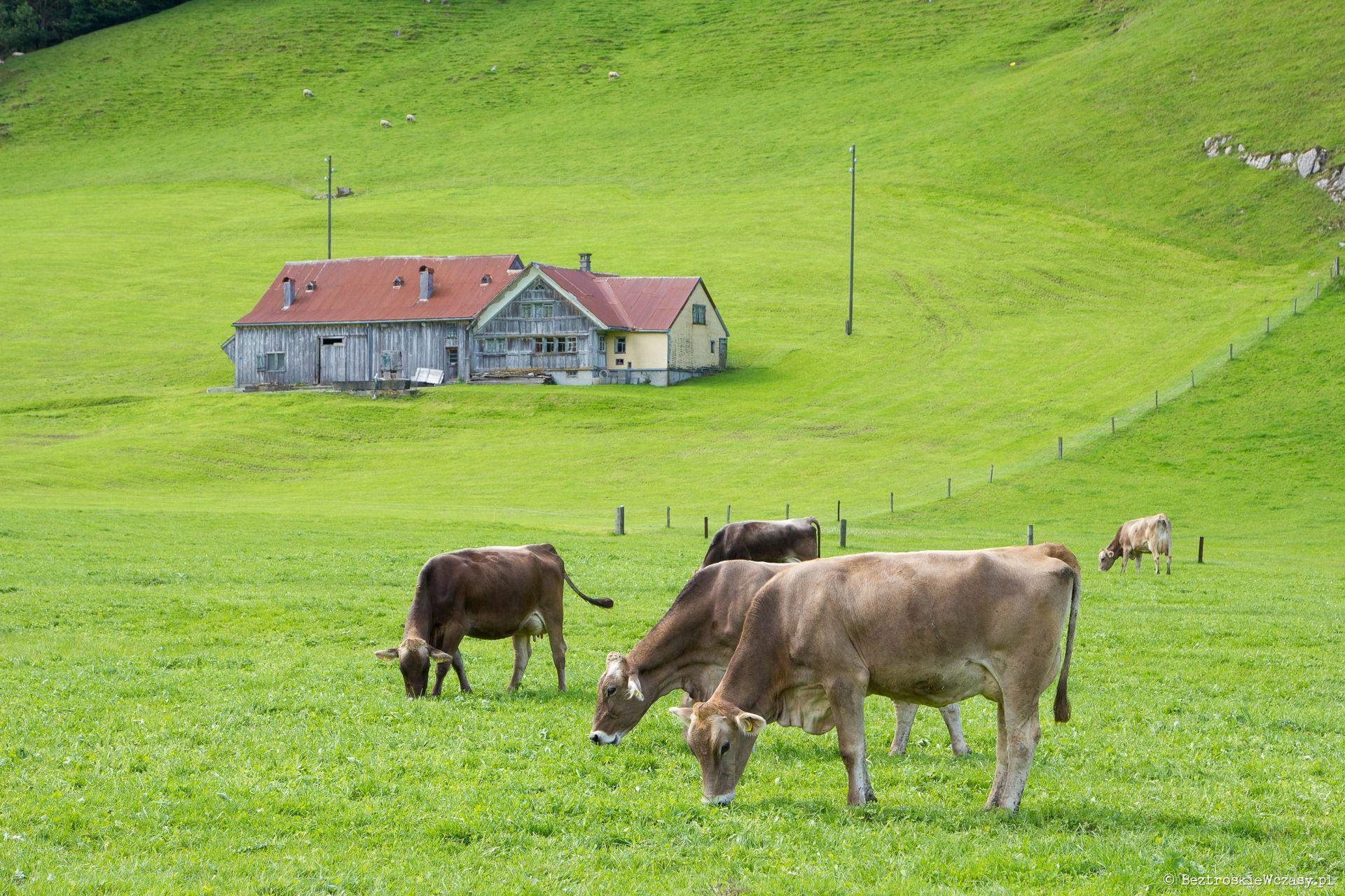 Szwajcaria: w klimacie Appenzell