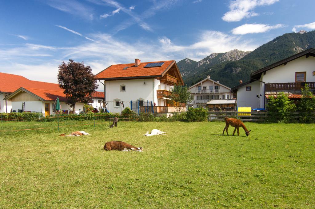 Niemcy: Bawaria. Przydomowa hodowla wikunii