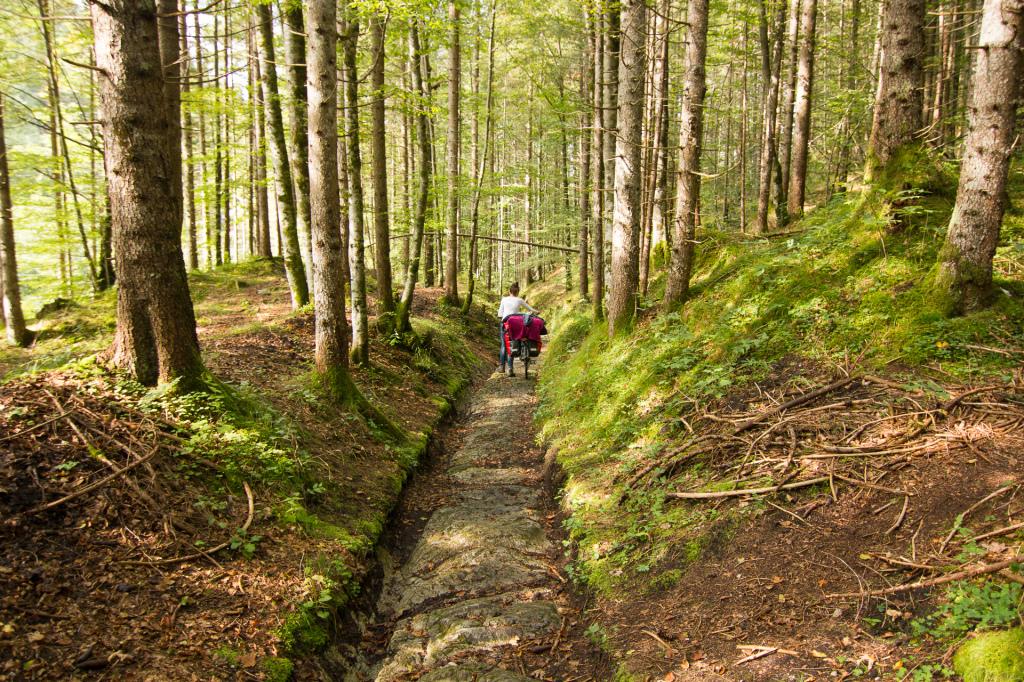 Niemcy: Bawaria. Leśny szlak rowerowy