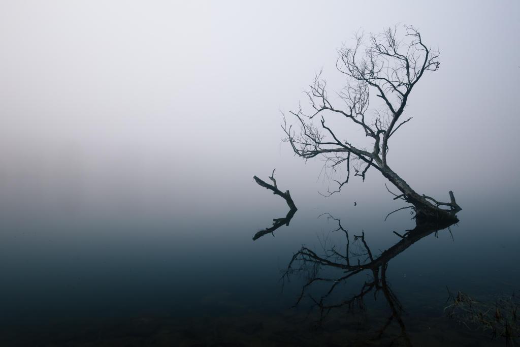 Poznań: słynne drzewo na jeziorze Rusałka