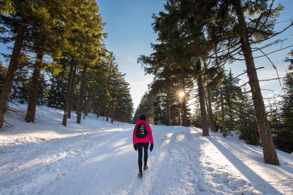 Masyw Śnieżnika: w drodze do schroniska