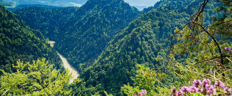 Propozycja wycieczki: Najpopularniejsze szczyty Pienin