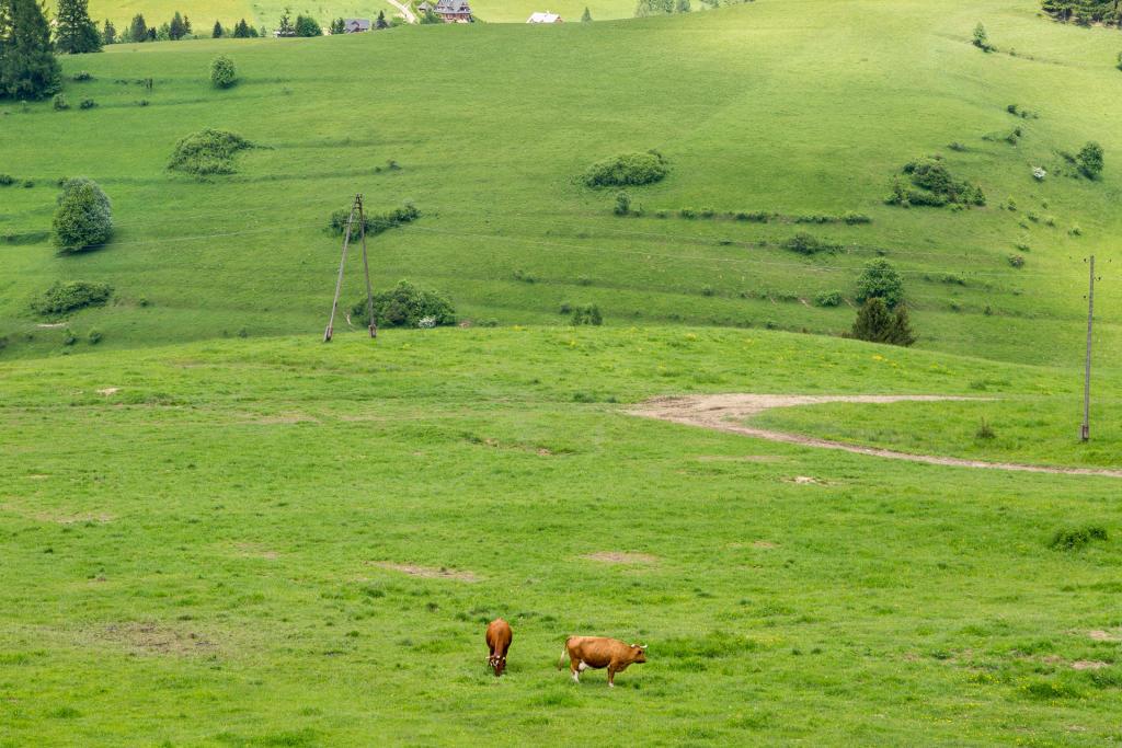 Pieniny: wszędobylskie polany