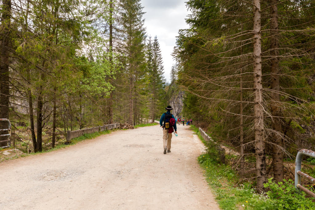 Droga wzdłuż Doliny Chochołowskiej