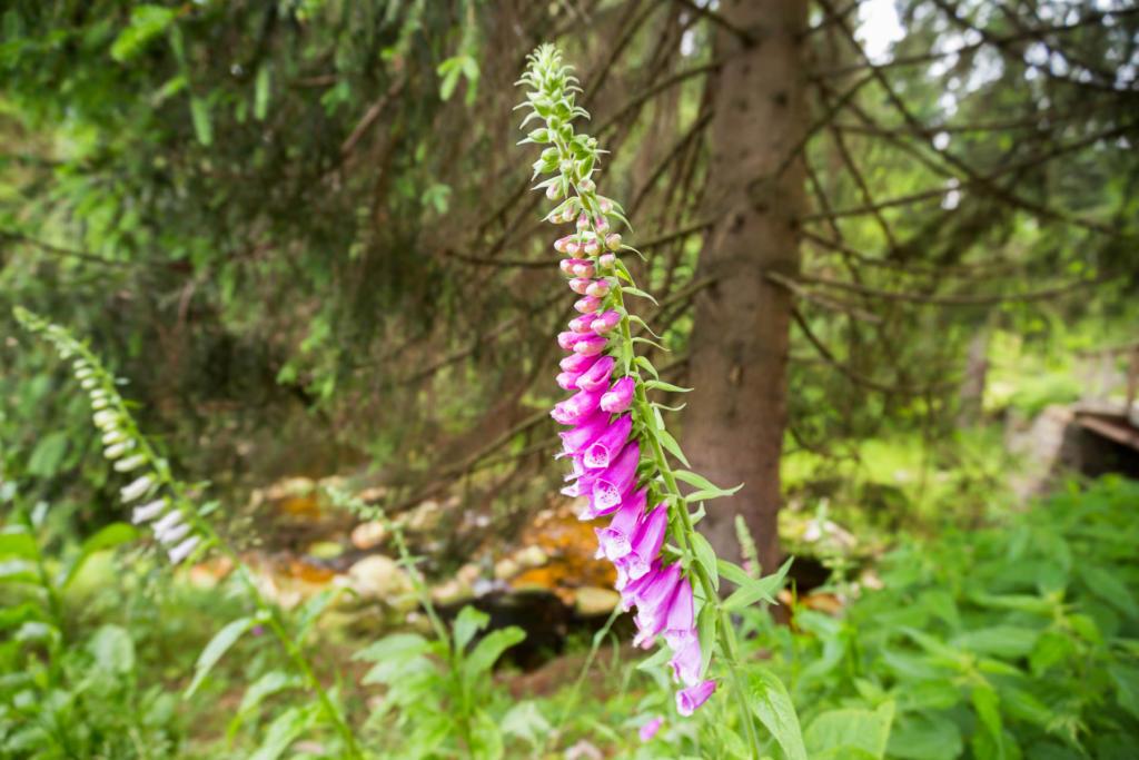 Flora Gór Izerskich